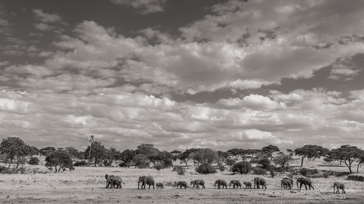 elephant line - 2015