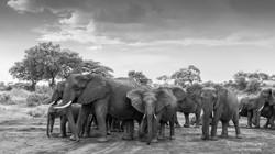elephants on the leave