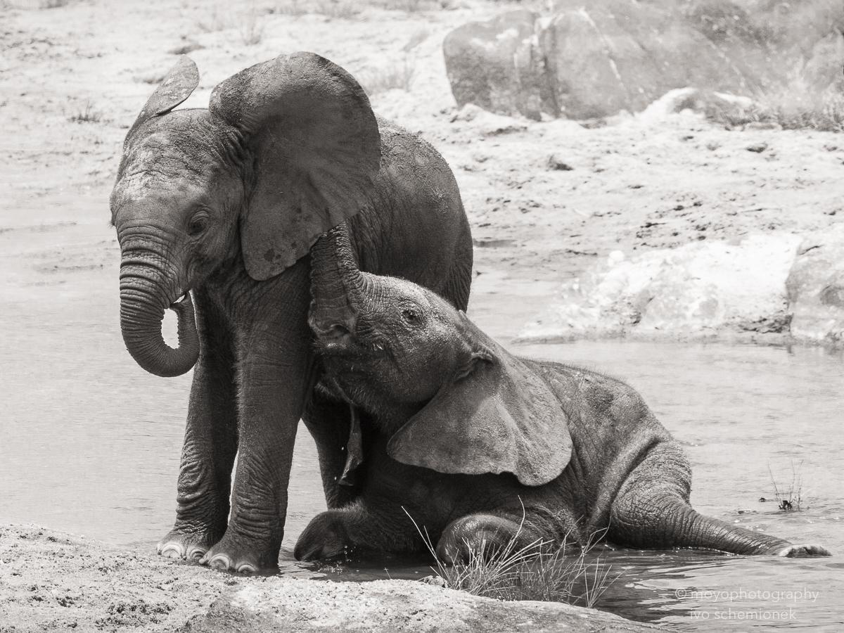 elephant's secret