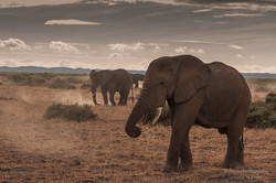 elephant dust - 2013