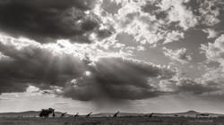 giraffes before rainstorm - 2015