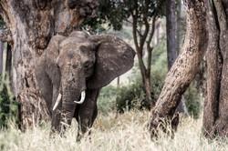 elephant eternity - 2014