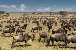 great migration - 2014