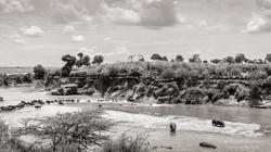 mara river crossing - 2013