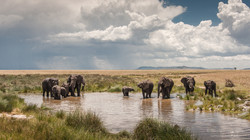 elephants at the waterhole - 2014