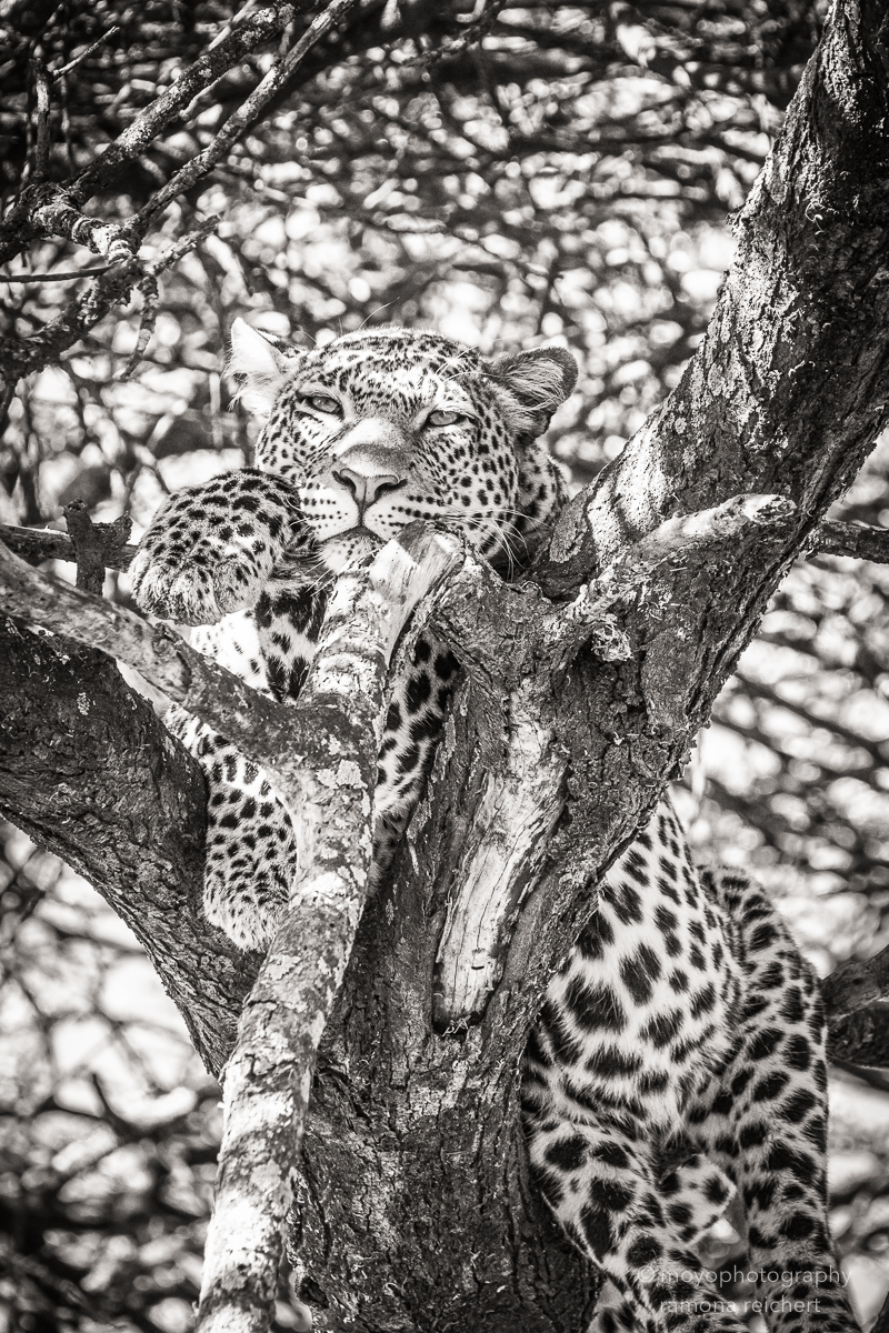 leopard camouflage -2015