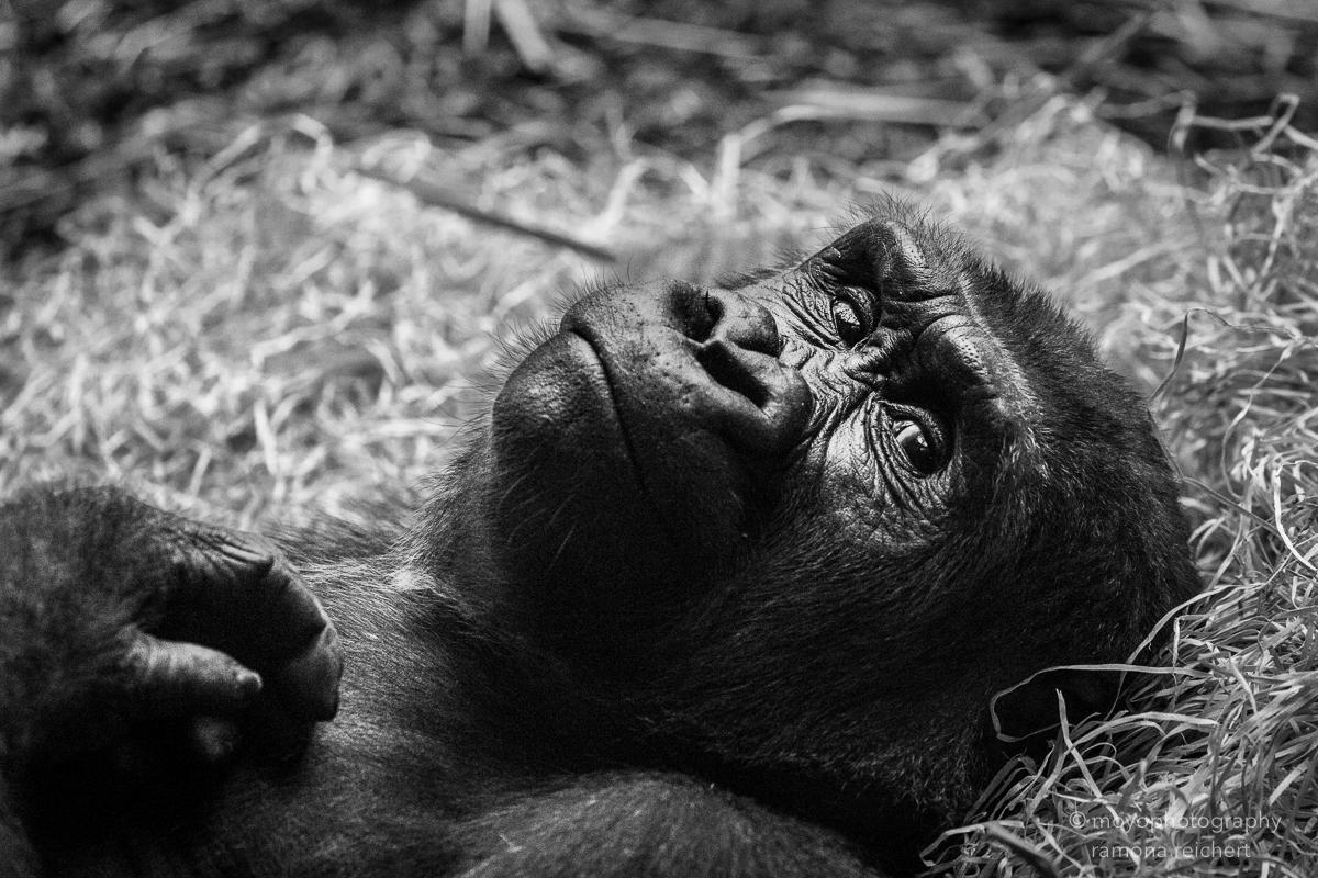 melancholy - zoo zürich - 2016
