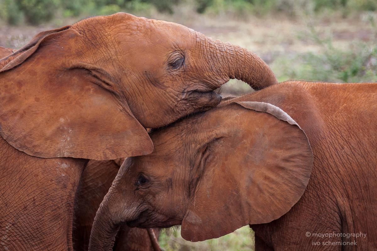 elephant orphans - 2013