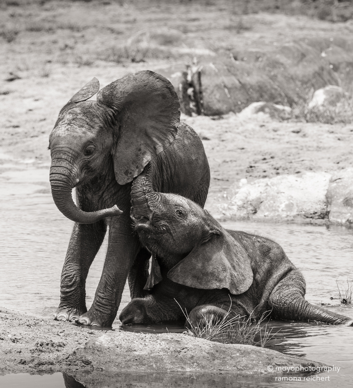 elephant's secrets
