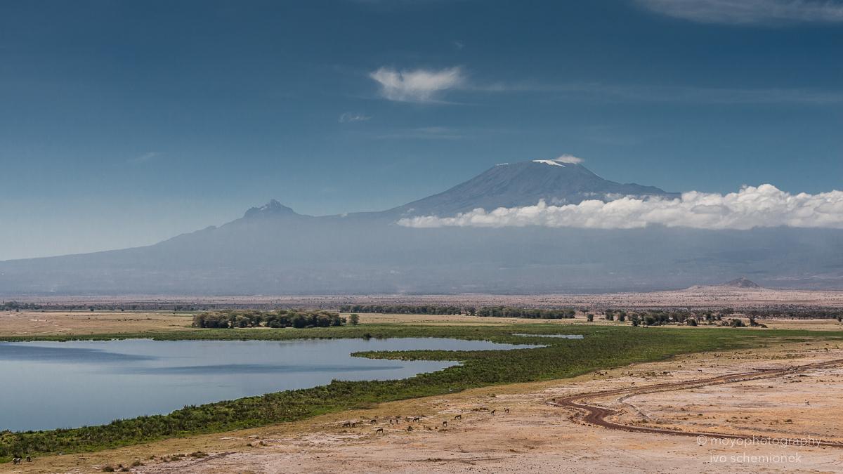 kilimanjaro and swamp - 2013