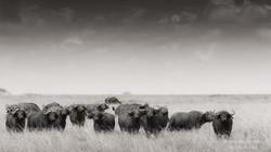 buffalo group - 2015