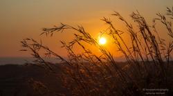grass at sunset - agrigento - 2015