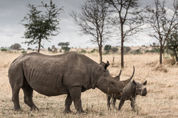rhino's next generation - 2015