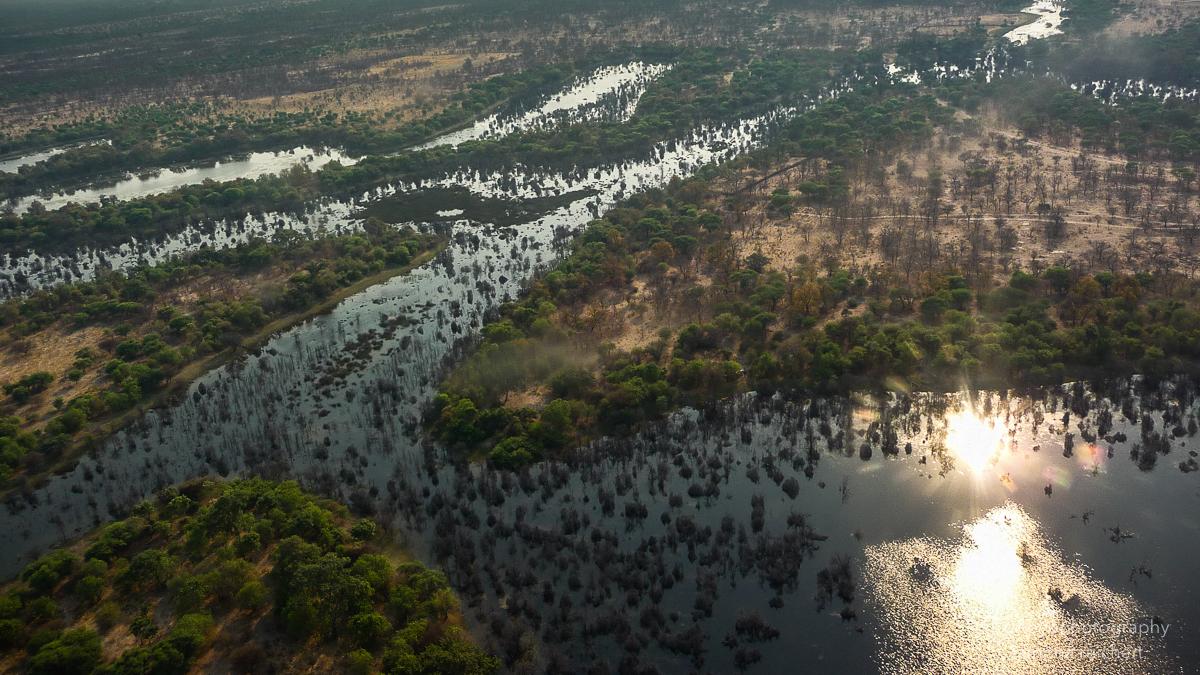 okavango delta - 2012