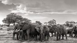 elephant family - 2015