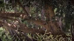 leopard relaxing - 2013