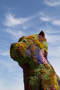 bilbao flower dog - 2015