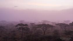 serengeti mystery - 2013