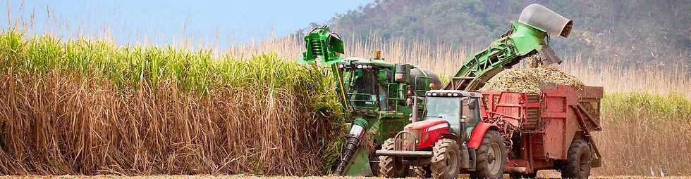 cane-harvesting.jpg