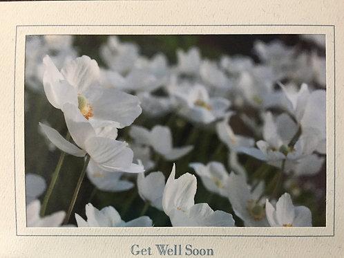 C-6474 White Flowers