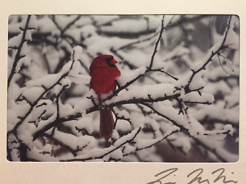 C-9401 Male Cardinal Snowy Tree