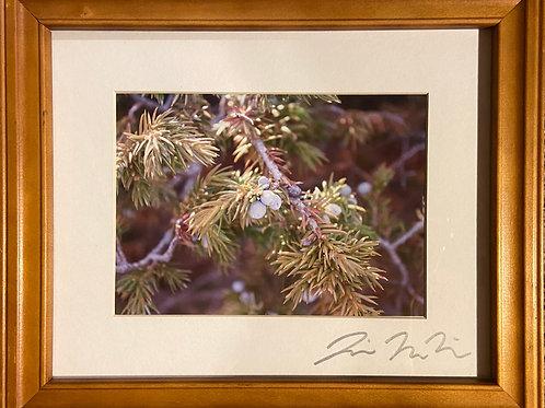 F10x12-2591 Berries Wyoming
