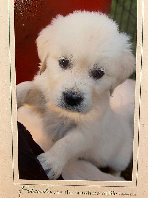 C-1721 Puppy standing w/ Red background
