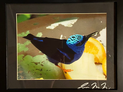 F9x11-0048 Teal Bird Orange