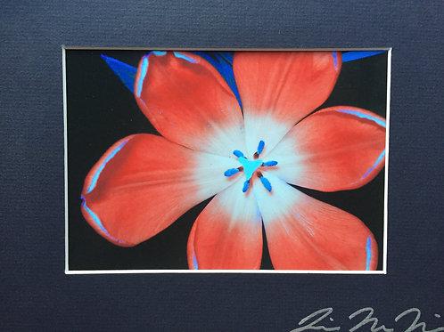 M8x10-0875 (2) Intense Color Flower KS