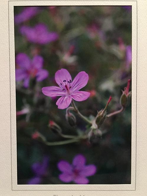 C-3253 Purple/ Pink Tiny Flowers