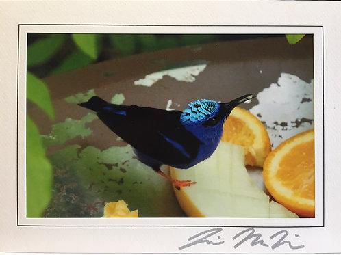 C-0048 Teal Bird Orange