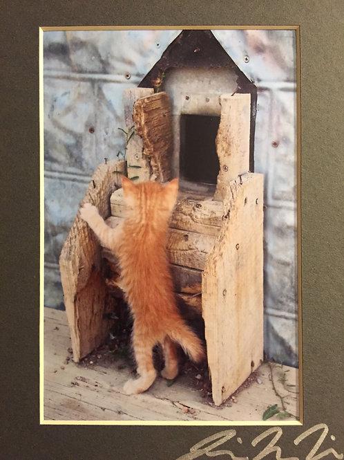 M5x7-4982 Kitten With House Door SD 1880 Town