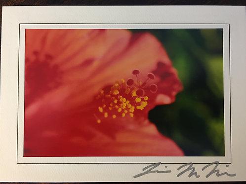 C-6875 Hibiscus