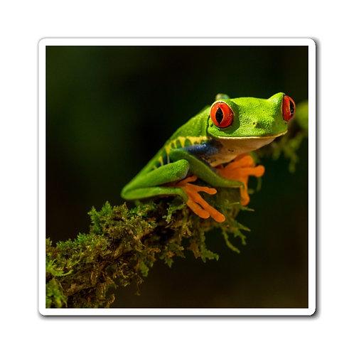 Frog Magnets