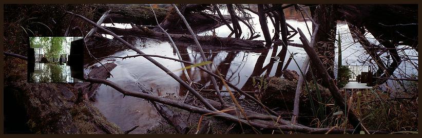 photographie ; architeture ; arbre ; eau ; nature ; nos corps ont leurs raisons ; 2021 ; collection oeuvres d'art UdeM