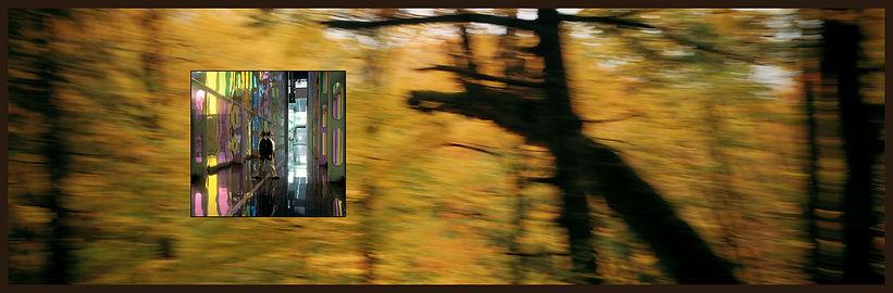 photographie ; architecture ; arbre ; nature ; nos corps ont leurs raisons ; 2021 ; collection oeuvres d'art UdeM