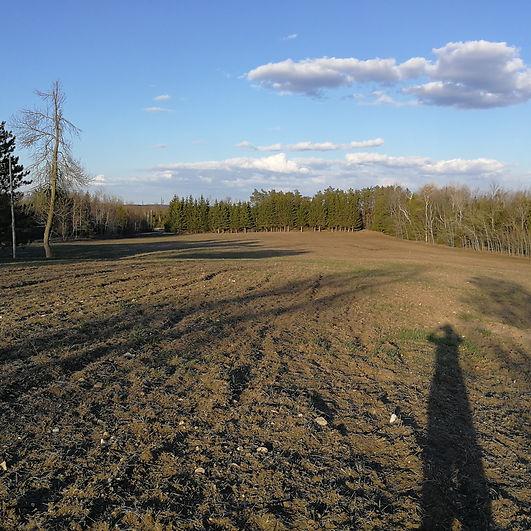 2020 Field.jpg