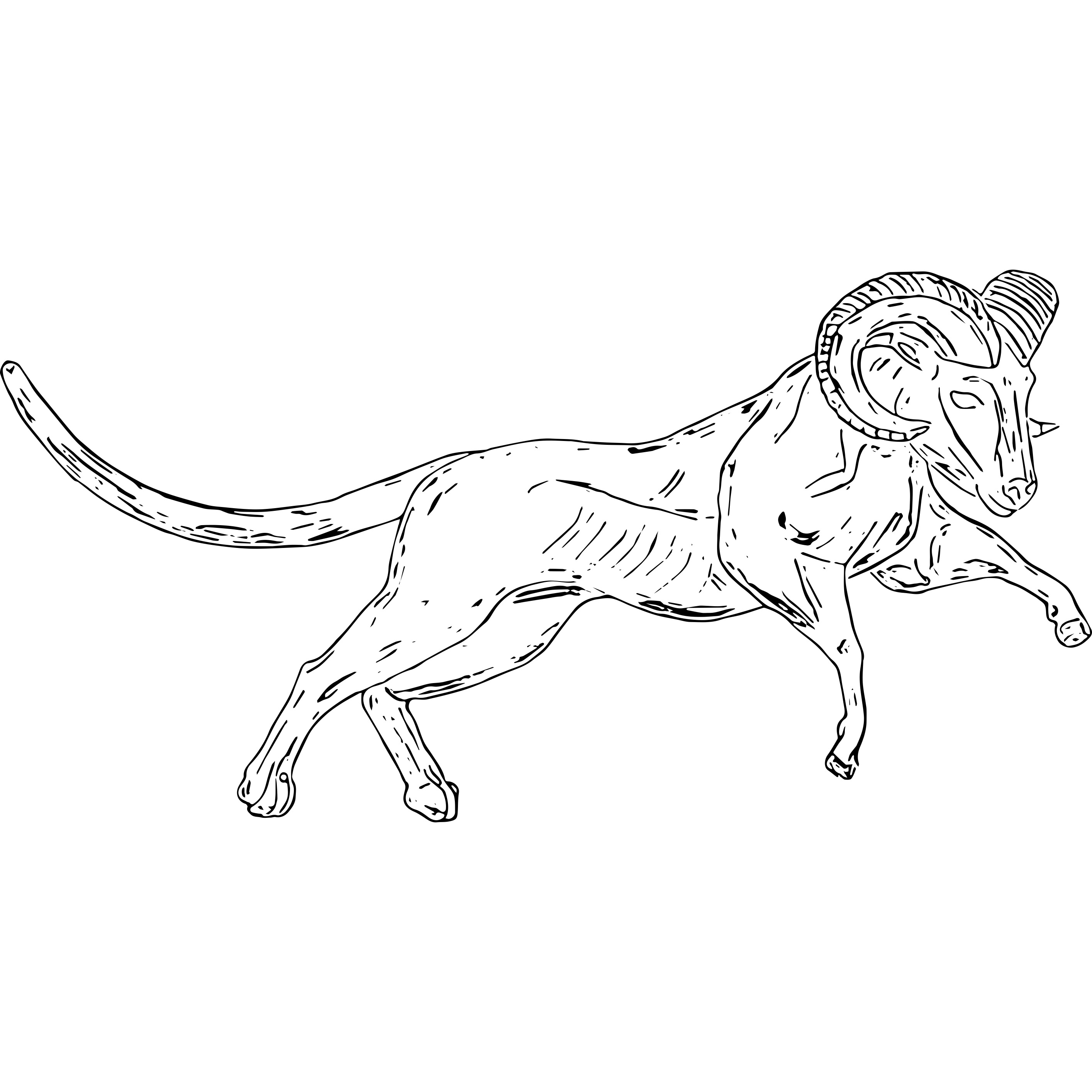 Cheetah.Ram_action sketch