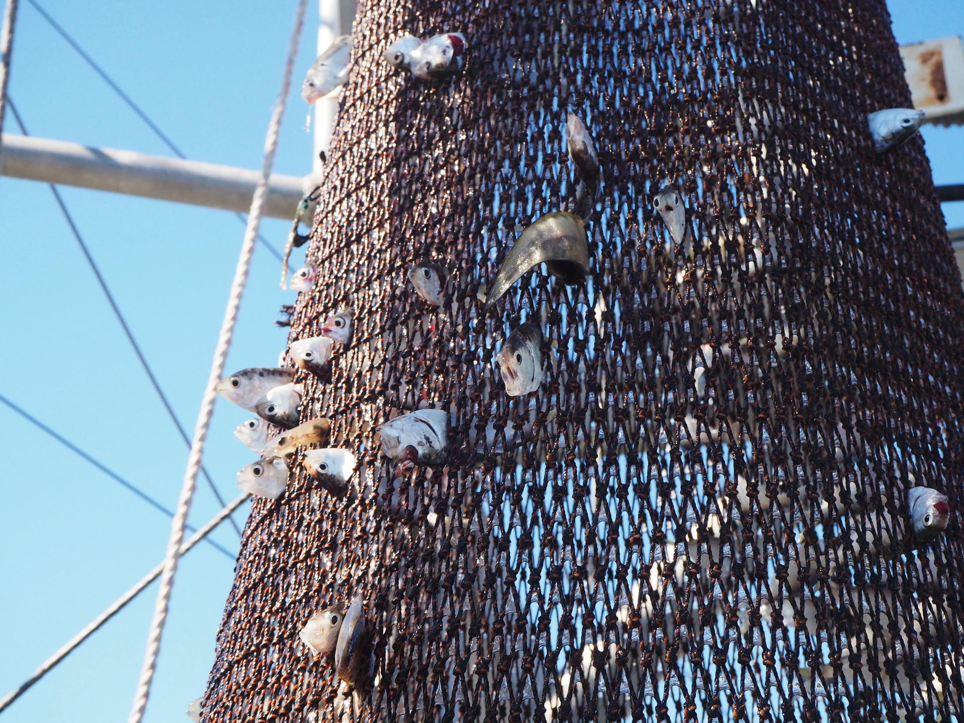 Fish Through Netting (2019)