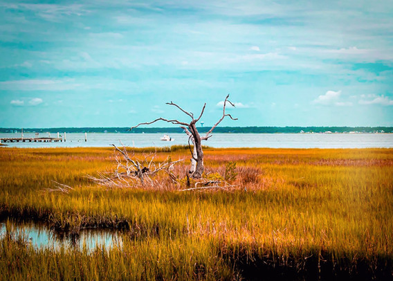 Nature Photographer NC