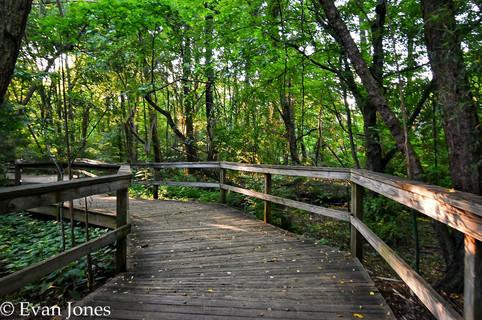 Nature Photography NC