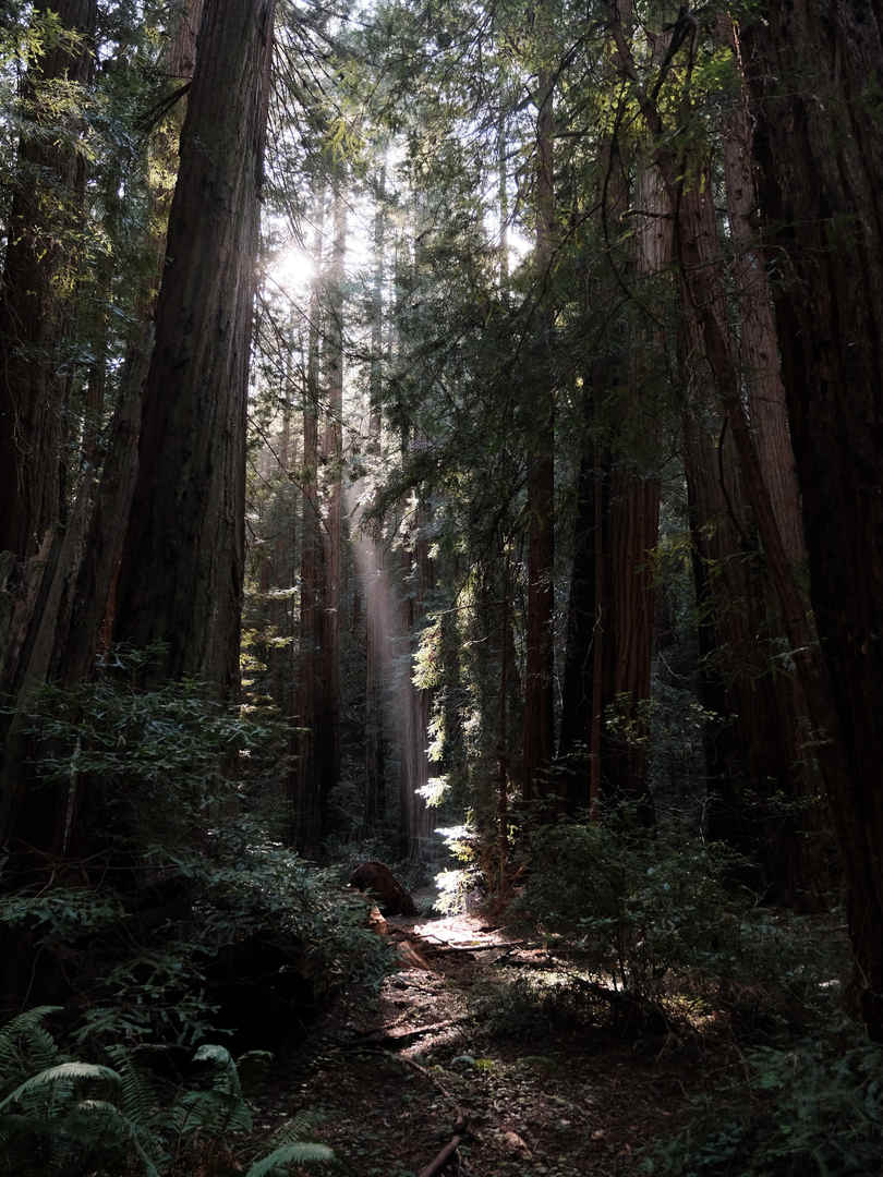 Muir Woods Hike