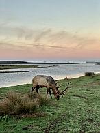 Elk Usal Campground