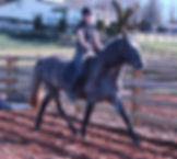 classical dressage, classical dressage coach, hunter jumper coach, hunter jumper coach, riding lessons langley, horseback riding lessons langley, hunter jumper horse training, riding lessons langley, riding lessons abbotsford, riding lessons aldergrove, horseback riding lessons langley, horseback riding lessons abbotsford, horseback riding lessons aldergrove, horse training langley, horse training abbotsford, horse training aldergrove, horse trainer langley, horse trainer aldergrove, horse trainer abbotsford, robyn marsen, robyn elizabeth marsen, horse trainer, horse starting, alliance training, alliance training and stud, alliance training & stud, alliance stud, riding lessons lower mainland, horseback riding lessons lower mainland, horse trainer lower mainland, horse training lower mainland,  riding lessons, horseback riding lessons, riding instructor, riding coach, andalusian stallion, andalusian stallion at stud, stallion at stud, langley, abbotsford, aldergrove, horse, pony, farm
