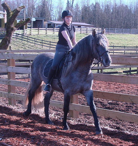 classical dressage, classical dressage lessons, classical equitation, riding lessons langley, riding lessons langley, horseback riding lessons langley, VA Jasonhorse training, alliance training, alliance training and stud, alliance training & stud, alliance stud, riding lessons lower mainland, horseback riding lessons lower mainland, horse training lower mainland, horse trainer lower mainland, riding lessons langley, riding lessons aldergrove, riding lessons abbotsford, horseback riding lessons langley, horseback riding lessons aldergrove, horseback riding lessons abbotsford, horse trainer langley, horse trainer abbotsford, horse trainer aldergrove, horse training langley, horse training aldergrove, horse training abbotsford, robyn marsen, robyn elizabeth marsen, horse trainer, horse starting, riding lessons, horseback riding lessons, riding instructor, riding coach, andalusian stallion, andalusian stallion at stud, stallion at stud, langley, abbotsford, aldergrove, horse, pony, farm,