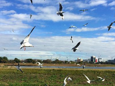 行徳野鳥観察舎友の会