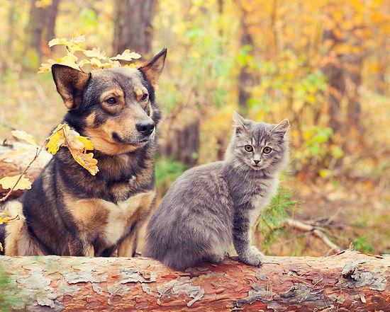 images_chien-chat-automne@2x.jpg