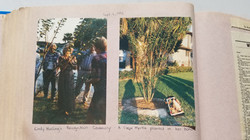 Honorary Crepe Myrtle Planting
