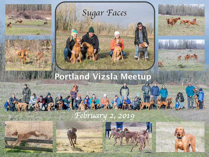 Vizsla Meetup Collage.jpg