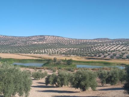 Temporary lagoon (Spain). Photo: Luciana Barbosa
